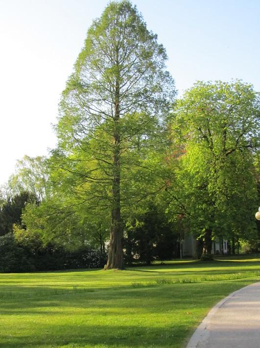 Der himmelhohe Baum